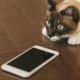 毎日1時間無料のiPhone向けクリスタ(CLIP STUDIO PAINT for iPhone)を試す